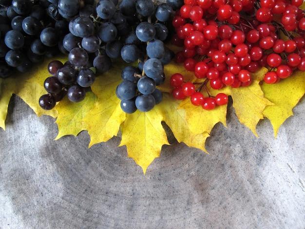 Herfst stilleven van gele esdoorn bladeren zwarte druiven en rode bessen van viburnum op een houten