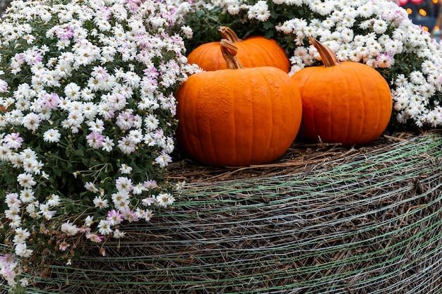 Herfst straatontwerp decor van oranje pompoenen. dankzegging, halloween. vakantie decoratie achtergrond met seizoensgebonden oogst groenten en bloemen. buiten feest.