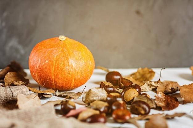 Herfst thanksgiving. plat leggen. pompoen, kastanjes, gebreide trui liggend op grijs
