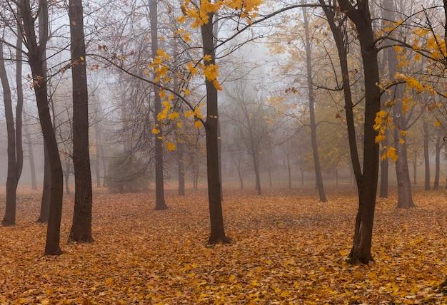Herfst tijd van het jaar bij bewolkt weer in het bos