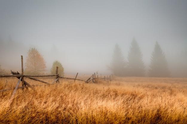 Herfst veld in de ochtend