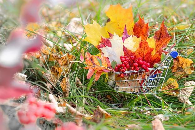Herfst verkoop. herfst seizoen. esdoornbladeren, bessen in supermarktkarretje.