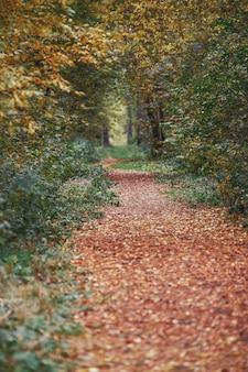 Herfst voetpad in de gele scène van de bomenaard in herfstpark