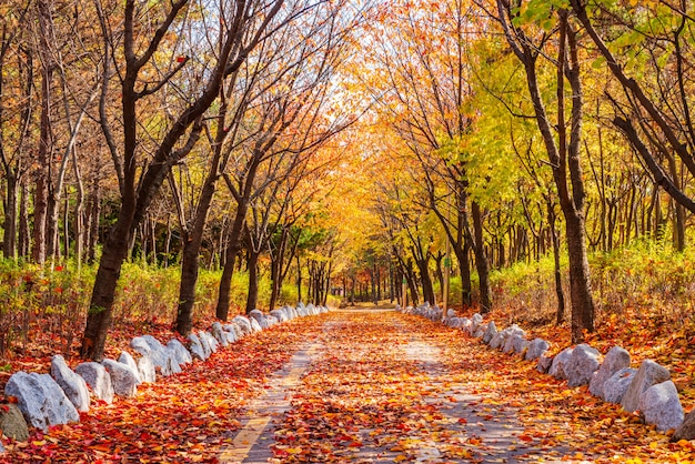 Herfst weg in het park