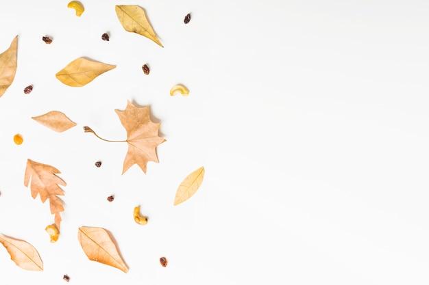 Herfst zijgeklets van herfstbladeren en zaden