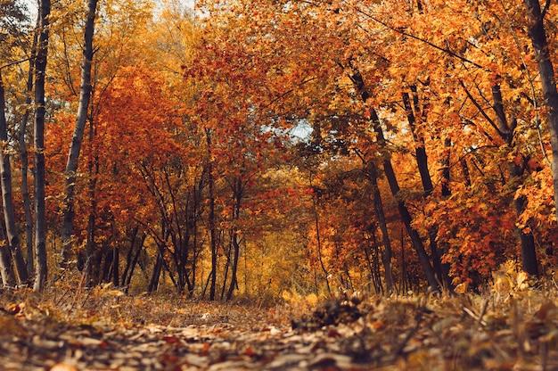 Herfst zonnig landschap.