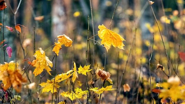 Herfstachtergrond, gele herfstbladeren in het bos
