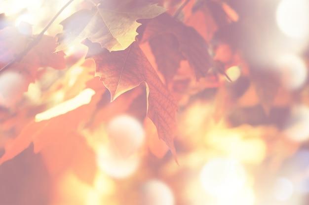 Herfstachtergrond met esdoornbladeren met zacht licht en bokeh-effect