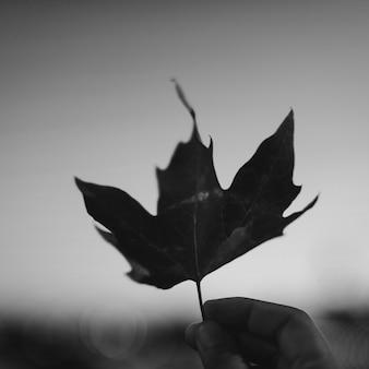 Herfstblad in de lucht