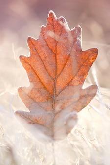 Herfstblad in de vorst. eikenblad in het de herfst witte gras in de vorst.
