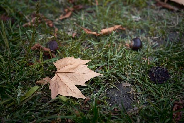 Herfstblad op het gras