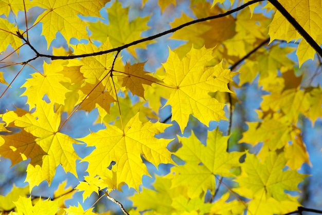 Herfstbladeren achtergrond in een zonnige dag