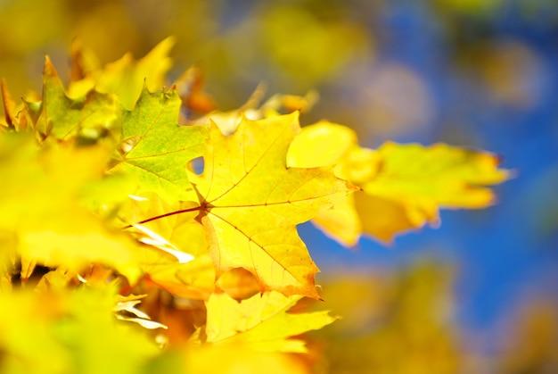 Herfstbladeren achtergrond in zonnige dag