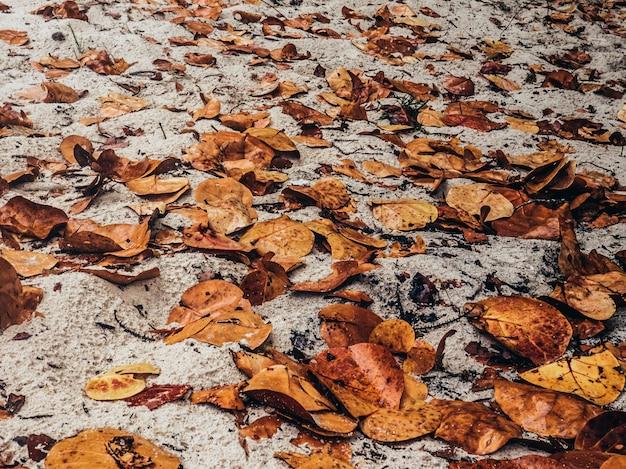 Herfstbladeren achtergrond.