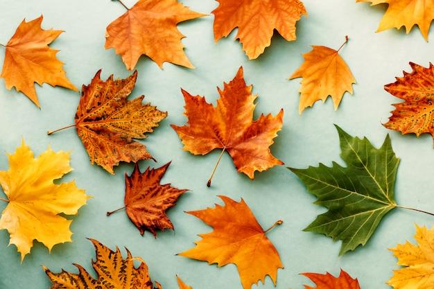 Herfstbladeren achtergrond