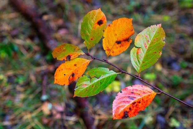 Herfstbladeren, bladeren, kleurenbladeren, herfst, bladeren in het gras, herfstbladeren in het gras, vallende herfstbladeren, dauwdruppels, dauwdruppels op herfstbladeren,