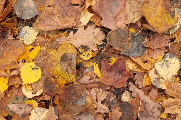 Herfstbladeren, bovenaanzicht. kleurrijk gevallen gebladerte.