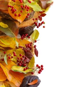 Herfstbladeren en bessen grens geïsoleerd op wit