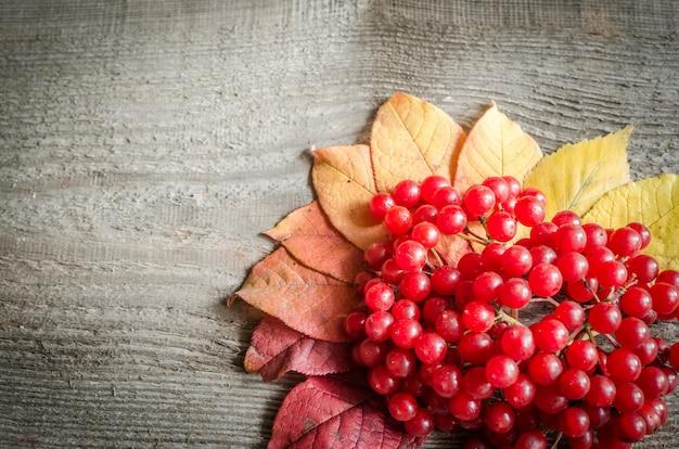 Herfstbladeren en bessen