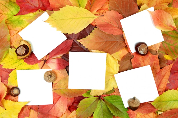 Herfstbladeren en vellen papier