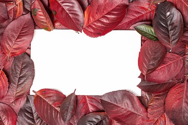 Herfstbladeren frame op een wit Premium Foto