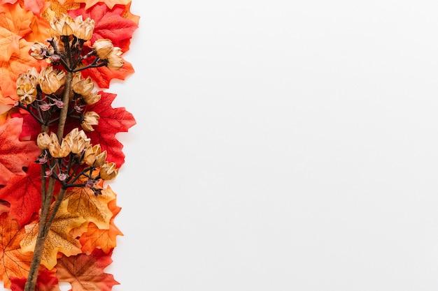 Herfstbladeren herbarium frame