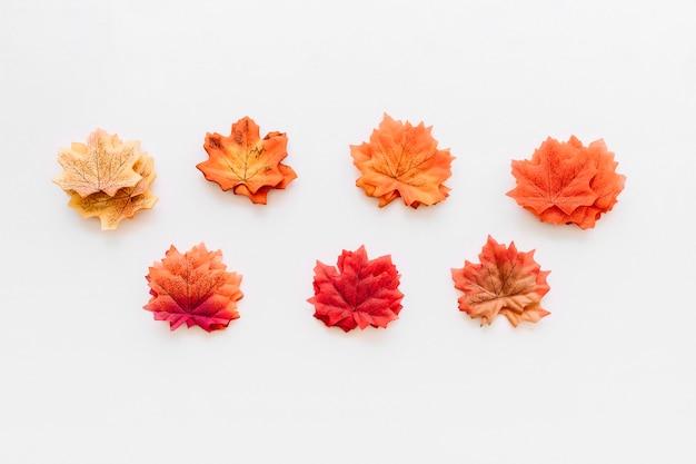 Herfstbladeren herbarium georganiseerd op wit oppervlak