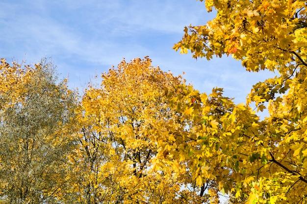 Herfstbladeren herfstseizoen, met veranderingen in de natuur in verschillende seizoenen van het jaar, zonnig warm weer in het park.