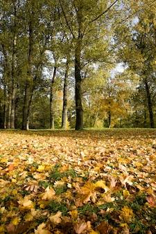 Herfstbladeren herfstseizoen