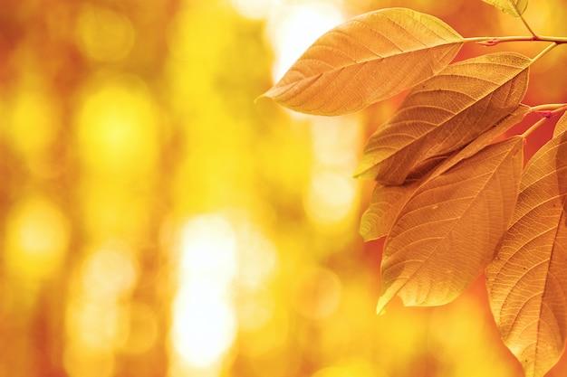 Herfstbladeren in de zon