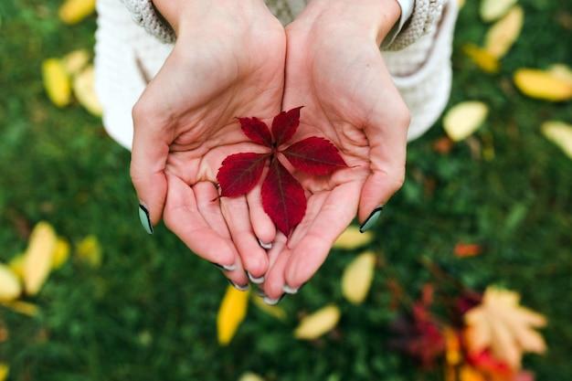 Herfstbladeren in handen van de vrouw