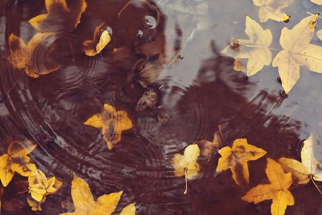 Herfstbladeren in plas. herfst regenachtig weer. herfst achtergrond. gele bladeren die in een plas drijven. het regent.