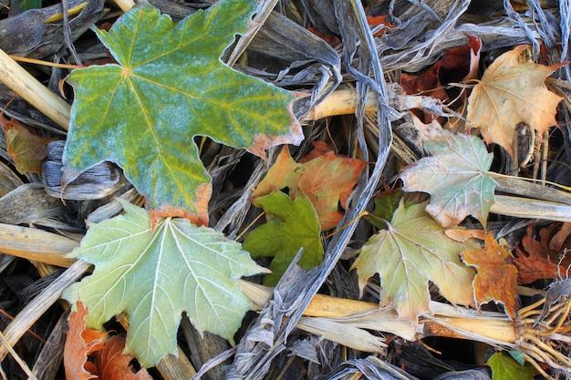 Herfstbladeren in vorst