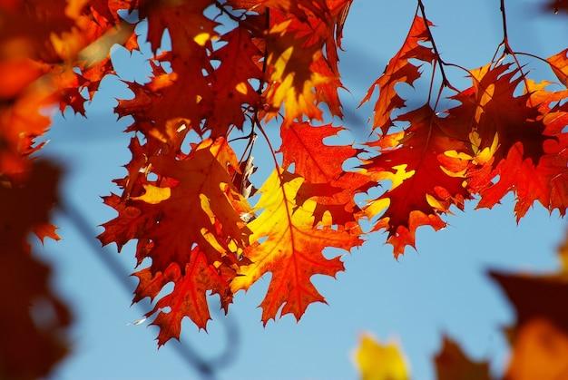 Herfstbladeren komen op een zonnige dag naar boven