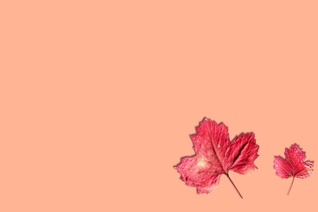 Herfstbladeren kopieer ruimte herfst minimalistische achtergrond met bladeren