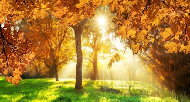 Herfstbladeren met wazig bos op de achtergrond in transsylvanië, roemenië.