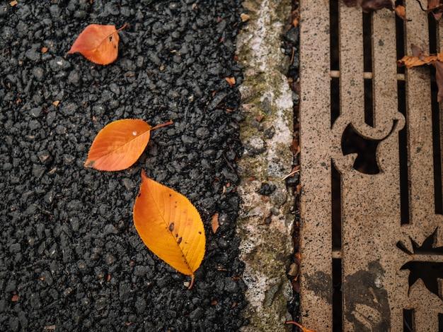 Herfstbladeren op beton in park