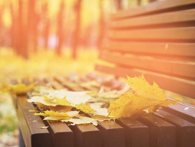 Herfstbladeren op een bankje in het bos, rode en oranje herfstbladeren achtergrond