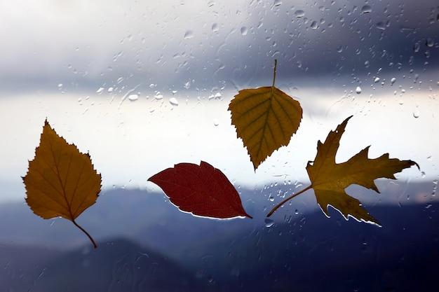 Herfstbladeren op een nat raam op een achtergrond van regenachtig weer