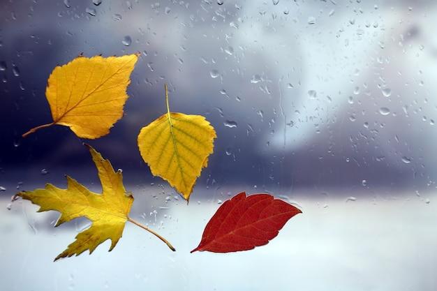 Herfstbladeren op een nat raam op een regenachtig weer