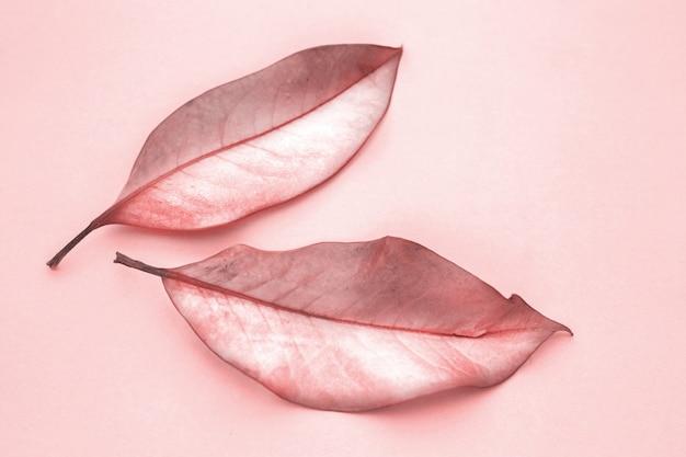 Herfstbladeren op een roze achtergrond