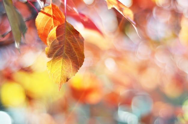 Herfstbladeren op een zonnige dag