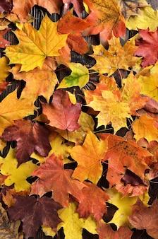 Herfstbladeren op houten achtergrond.