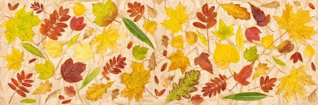 Herfstbladeren op kraftpapier kleurrijk boom gevallen bladpatroon herfstseizoen banner achtergrond