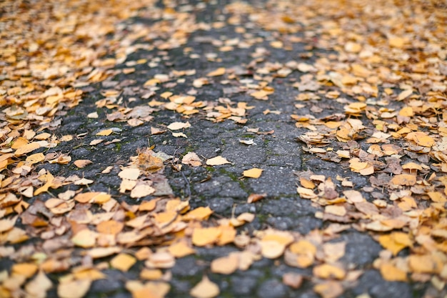 Herfstbladeren op stadspark traject
