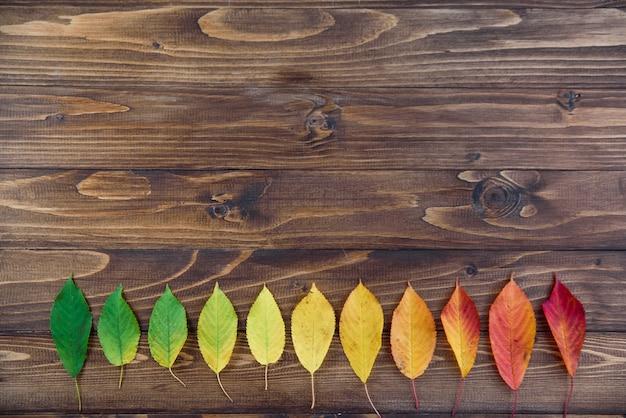 Herfstbladeren opgemaakt in een strook gaan van groen naar rood op een houten achtergrond