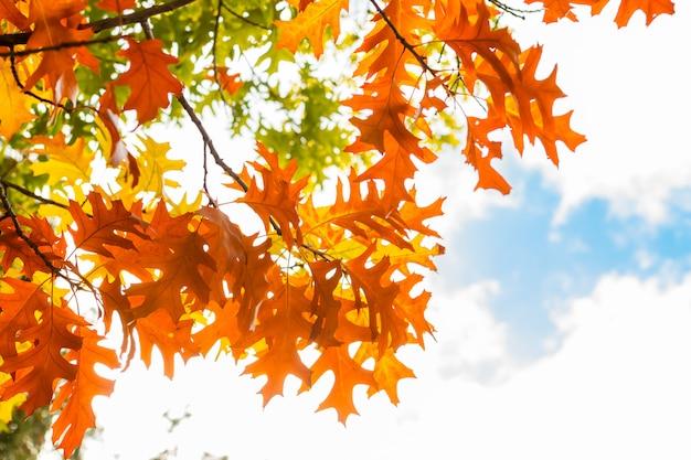 Herfstbladeren tegen blauwe hemel