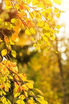 Herfstbladeren van gele kleur sieren de prachtige natuur bokeh achtergrond prachtige natuur achtergrond...