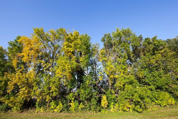 Herfstbladeren van loofbomen in een gemengd deel van het park, herfst septemberlandschap