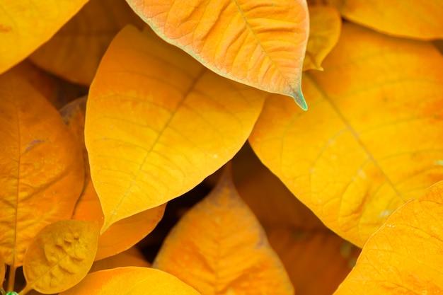 Herfstbladeren. vers rood blad. verandert van kleur.